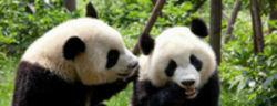 Google Panda Update in Deutschland