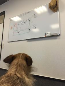 comspace-Agenturhund Leelo