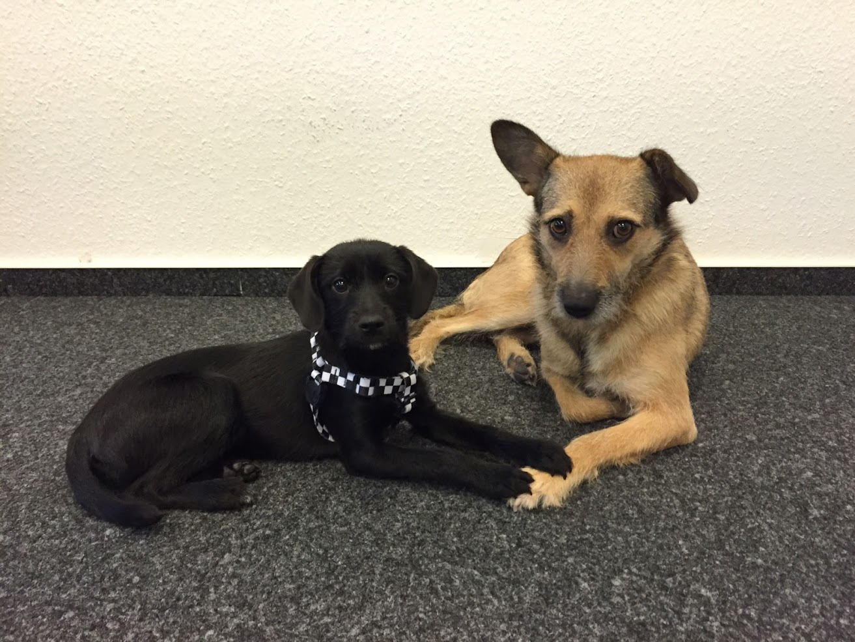 comspace Agenturhunde Leelo und Ruby