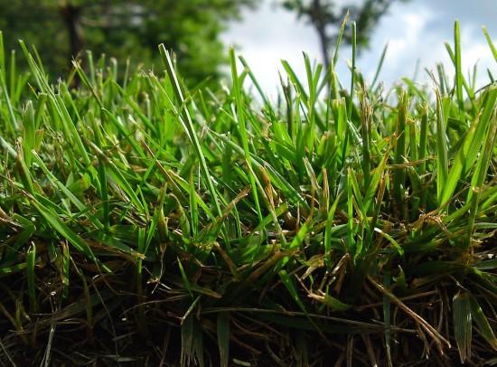 Grass and sidewalk - Blake Burkhart - (CC BY 2.0)