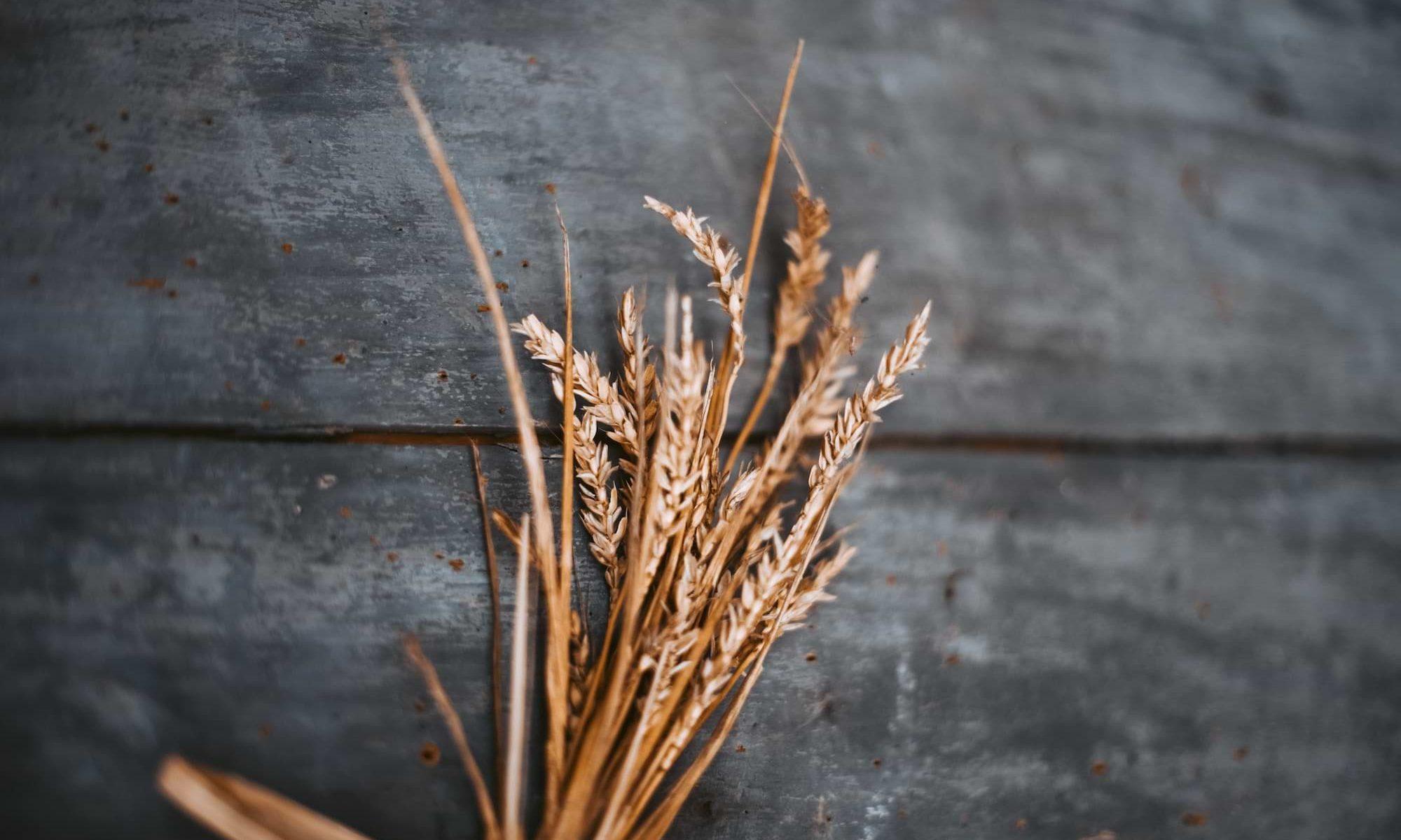 Spreu vom Weizen Agentur